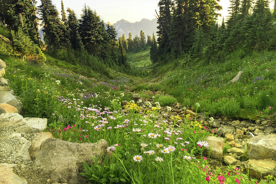 Mountain Wildflowers by Crystal Hoeveler