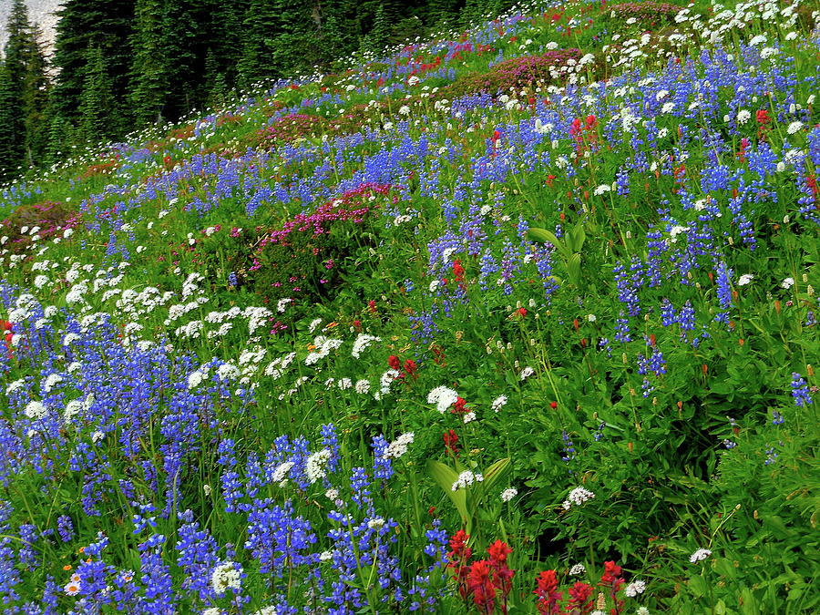 Mountain Wildflowers by My Lens and Eye - Judy Mullan -
