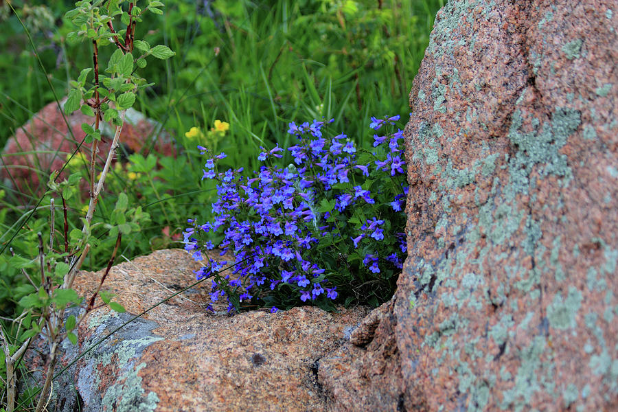 Mountain Wildflowers by Shane Bechler