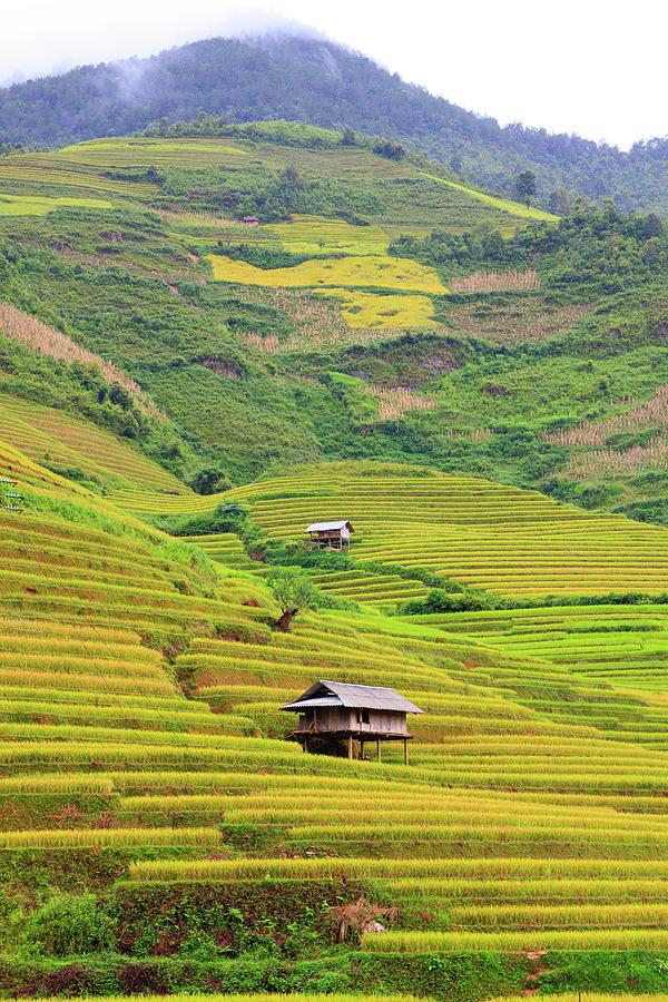 Vertical Photograph - Mountainous Rice Field by Akari Photography