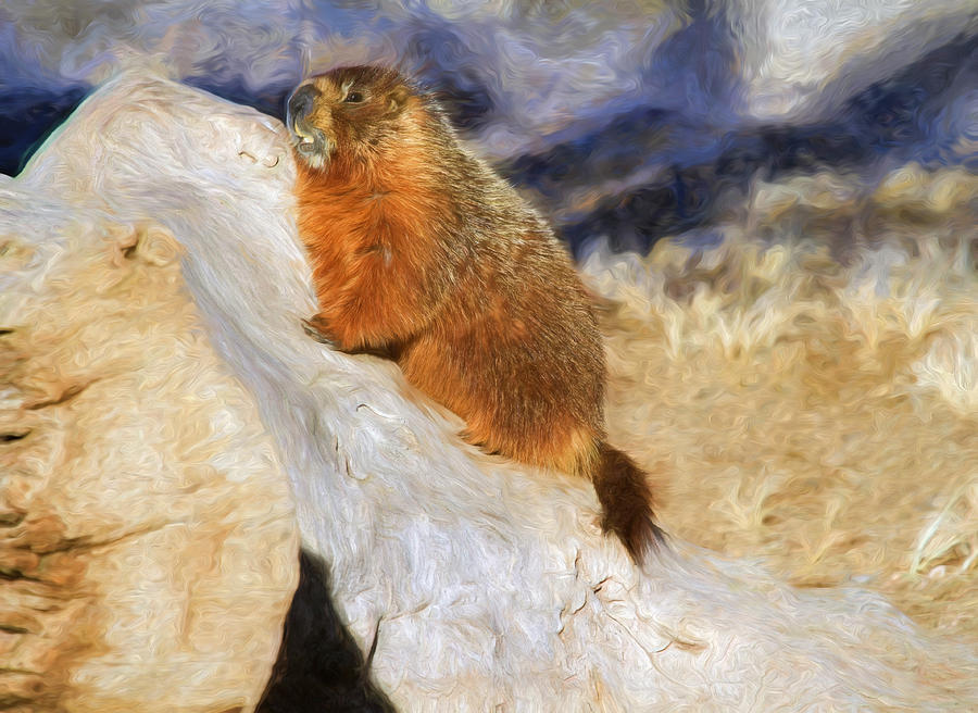 Groundhog Photograph - Mountains To Climb by Donna Kennedy