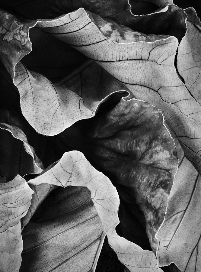 Leaf Photograph - Mounts Botanical Garden 2363 by Bob Neiman