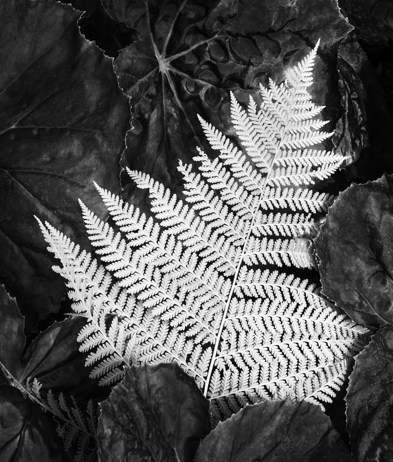Fern Photograph - Mounts Botanical Garden 2365 by Bob Neiman