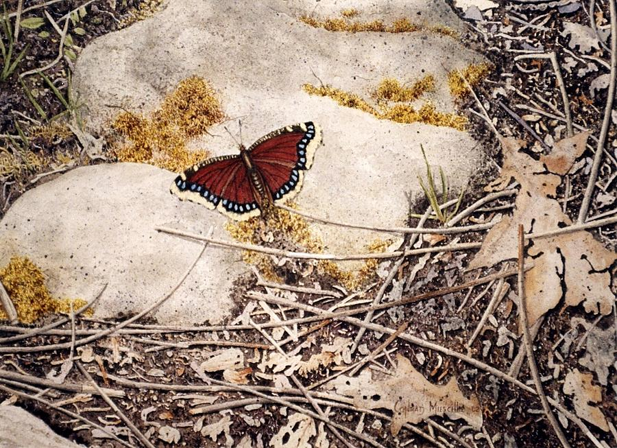 Butterfly Painting - Mourning Cloak by Conrad Mieschke