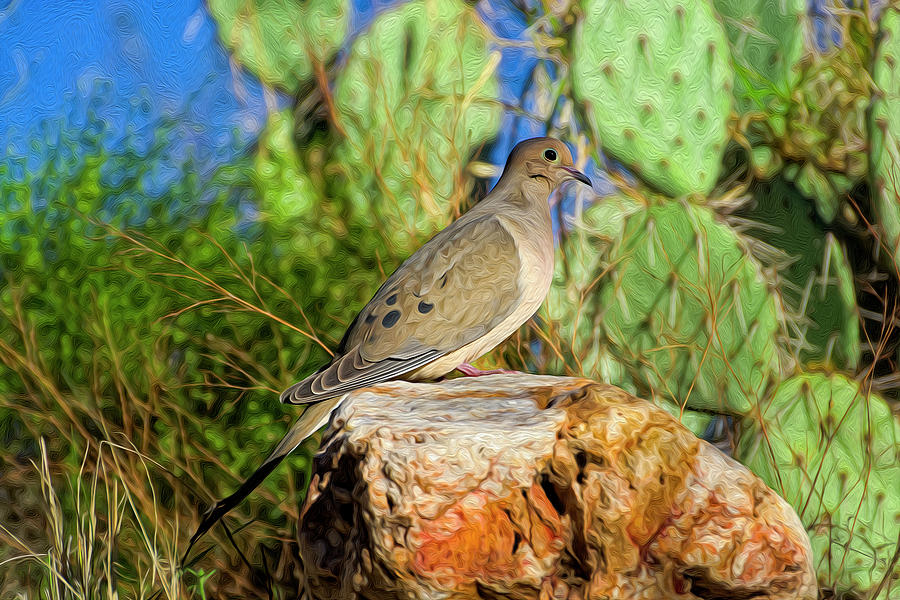 Mourning Dove Op2 Photograph