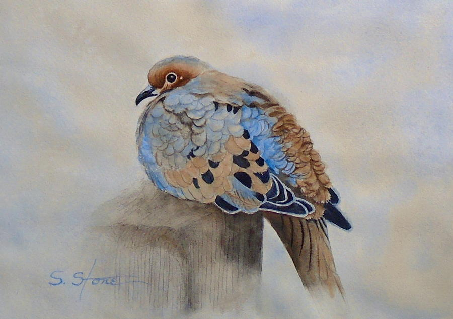 Mourning Dove by Sandra Stone