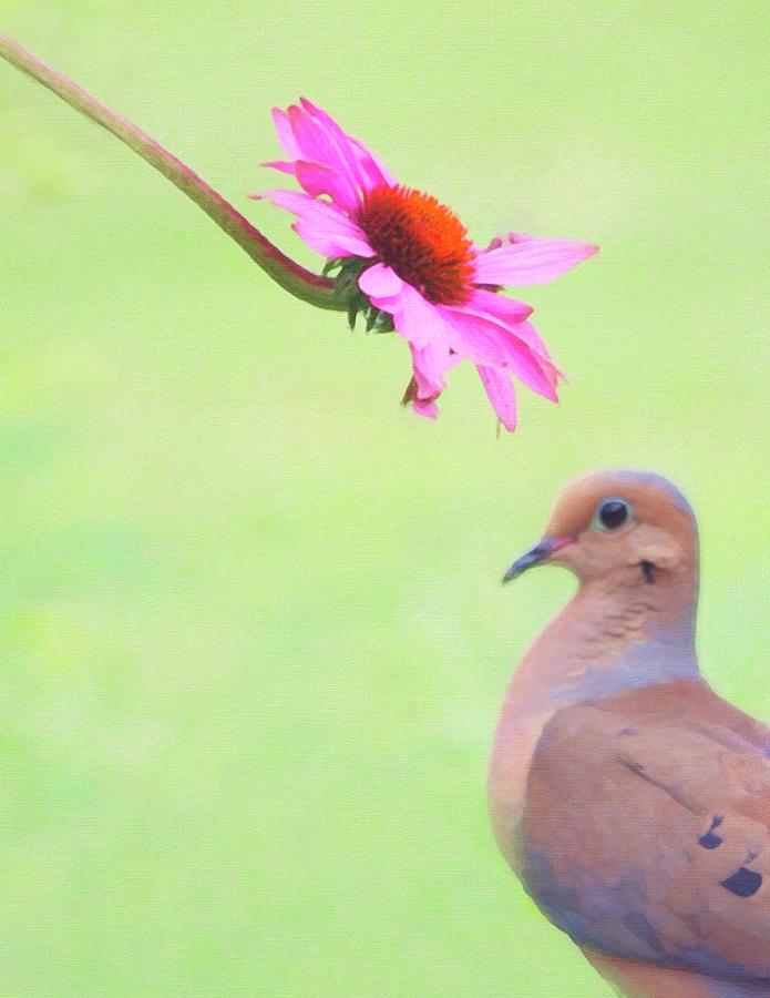 Mourning Dove by Sue Collura