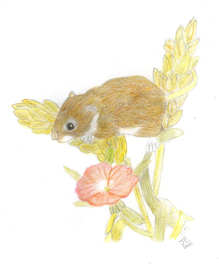 Mouse Drawing - Mouse On The Corn by Jacqueline Essex