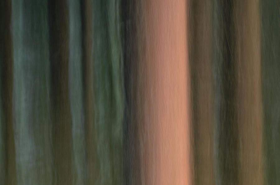 Icm Photograph - Moving forrest by Kolbein Svensson