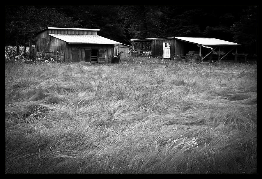 Black And White Photograph - Moving Grass by Dale Stillman