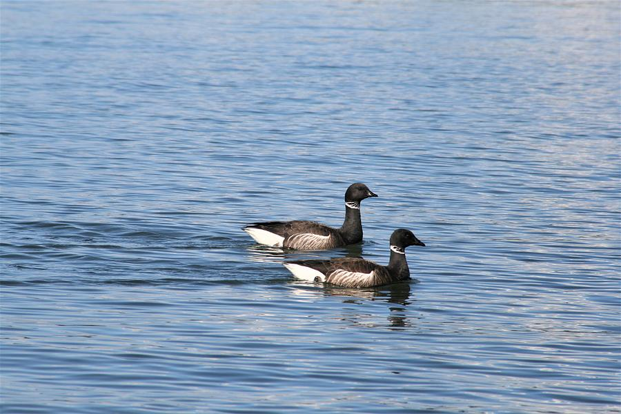Brant Photograph - Mr. And Mrs. Brant by Glenn Wachtman