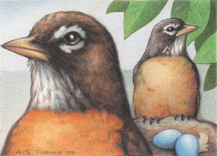Birds Drawing - Mr And Mrs Robin Are Expecting by Amy S Turner