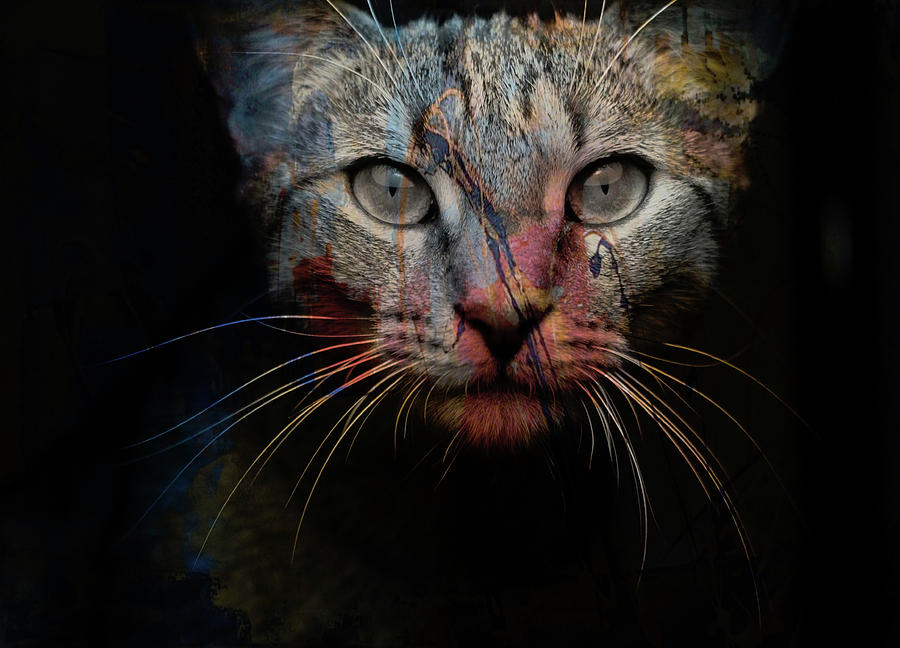 Cat Photograph - Mr Bo by Paul Lovering