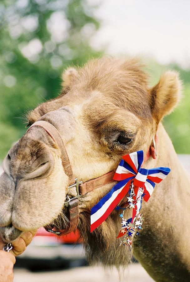 Camel Photograph - Mr. Camel by Cheryl Vatcher-Martin