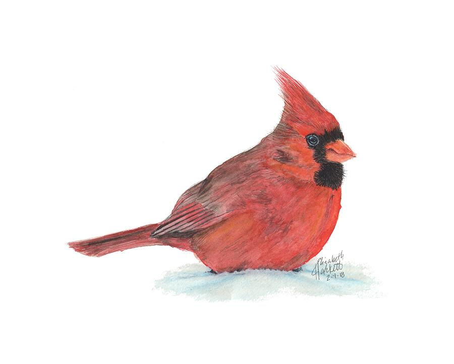 Mr Cardinal by Betsy Hackett