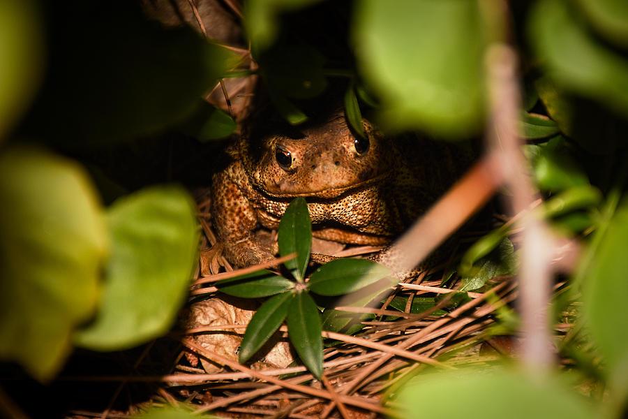 Mr Frog by Alessandro Della Pietra