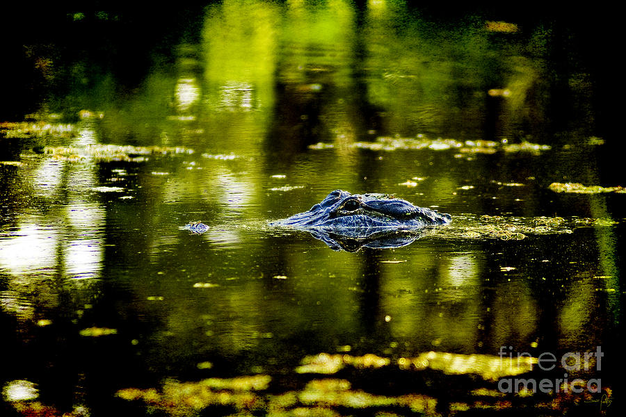 Alligator Photograph - Mr. Nice Guy by Scott Pellegrin