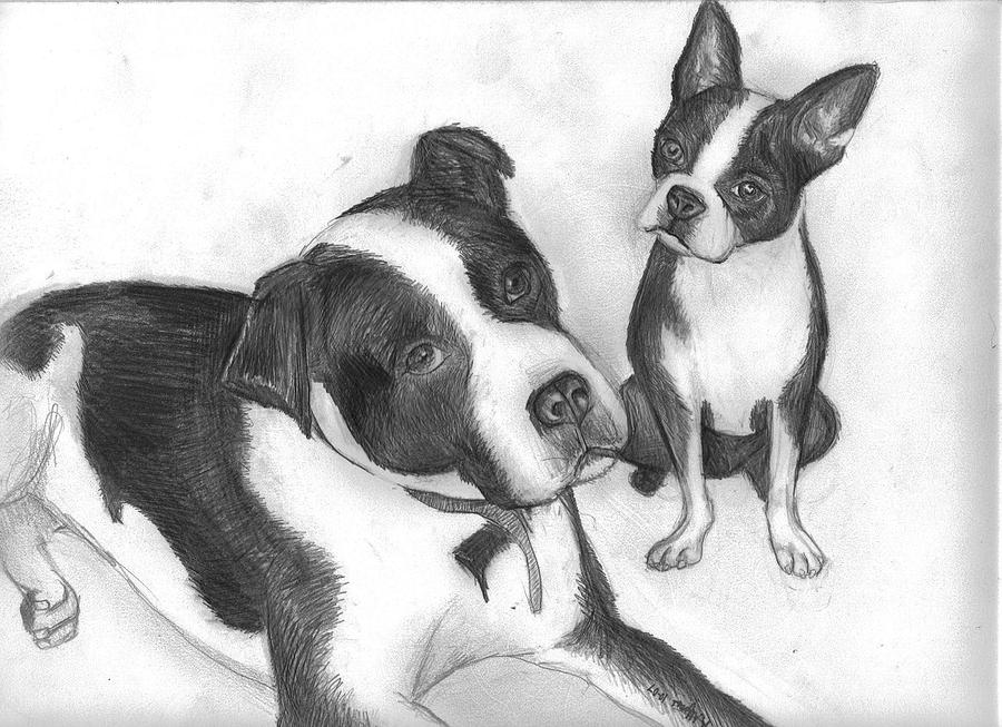 Dog Drawing - Ms Proutys Dogs by Katie Alfonsi