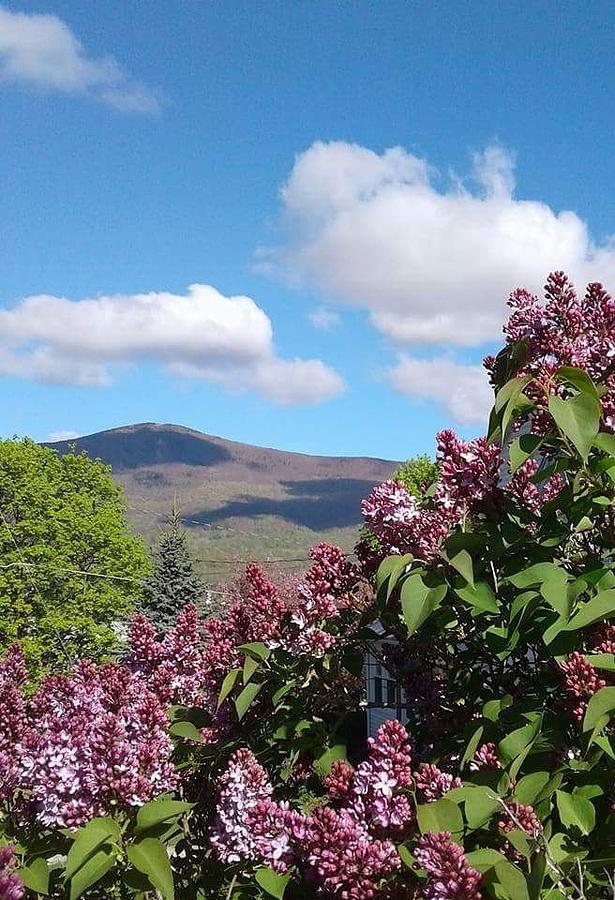 Mt Greylock Adams Massachusetts Lilacs Lilac Trees Spring