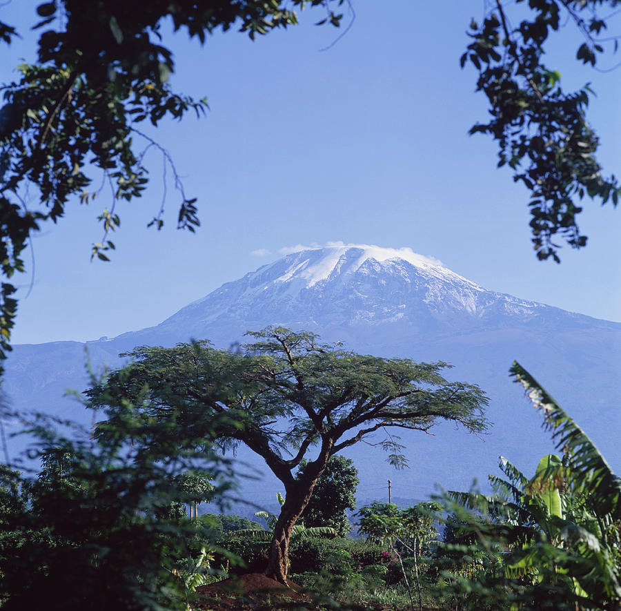 Mt Kilimanjaro Moshi Tanzania Photograph By David Constantine
