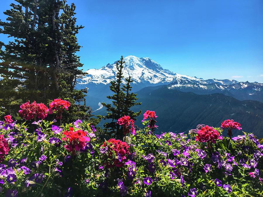 Mount Rainier Photograph -  Mt Rainier  by Art Spectrum