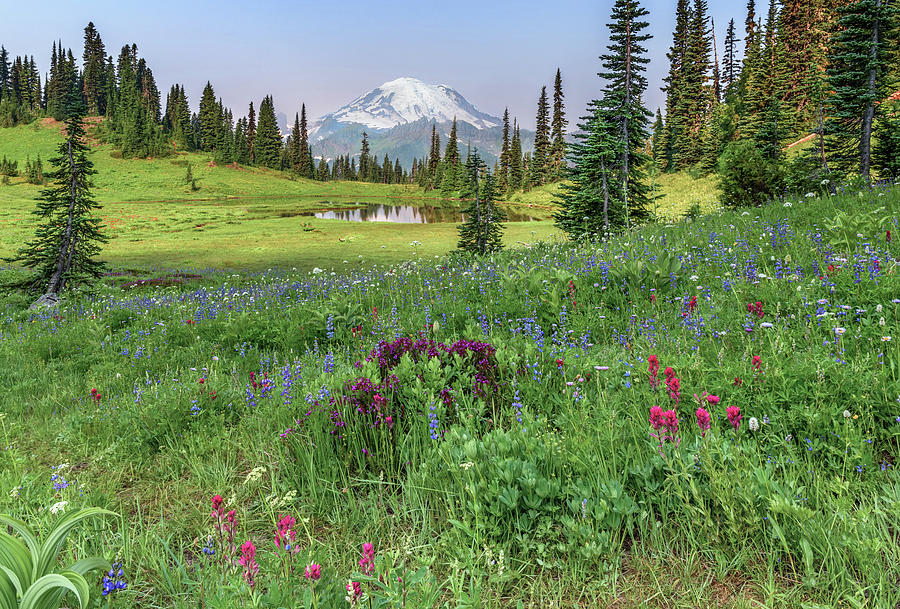 Mt Rainier Meadow Flowers by Harold Coleman