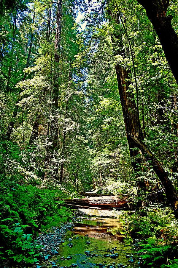 Woods Photograph - Muir Woods Study 22 by Robert Meyers-Lussier