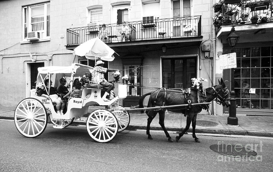 Mule Photograph - Mule And Buggy French Quarter New Orleans by Thomas R Fletcher