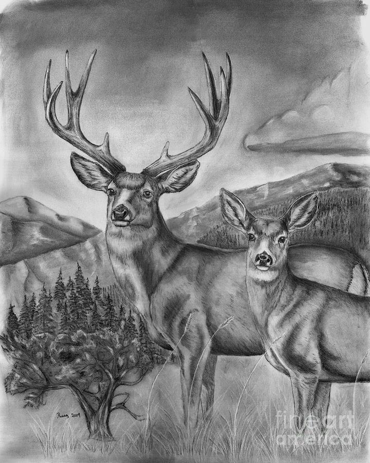 Kleurplaten Radip Mule Deer Heaven Drawing By Russ Smith