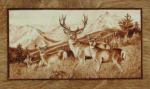 Mule Deer Herd In The Rockies Pyrography By Cate Mccauley