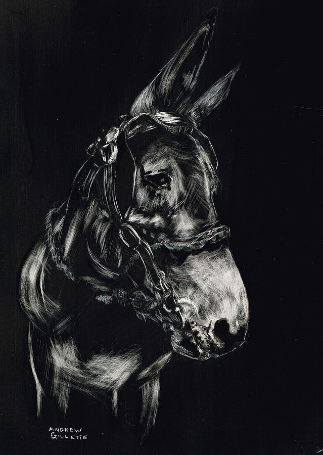 Mule Polly in Black and White by Andrew Gillette