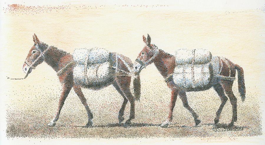 Equine Drawing - Mule Train by Pat Schermerhorn