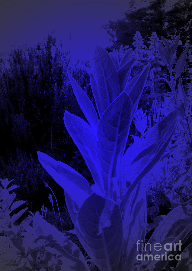 Mullein Digital Art - Mullein In The Moonlight by JoAnn SkyWatcher