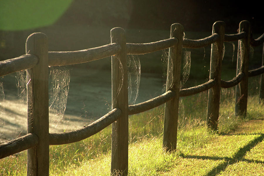 Multiple spiderwebs on wooden fence by Emanuel Tanjala