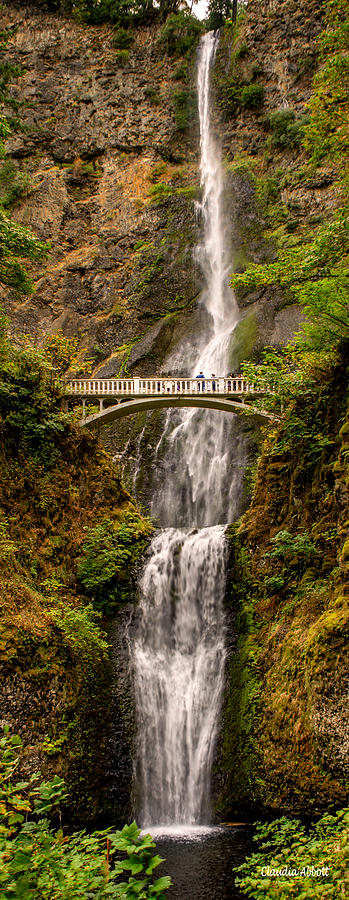 Multnomah Falls  by Claudia Abbott