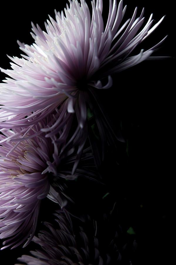 Flowers Photograph - Mum, No.2 by Eric Christopher Jackson