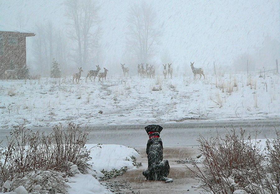 Deer Photograph - Murphy Watches The Deer by Eric Tressler
