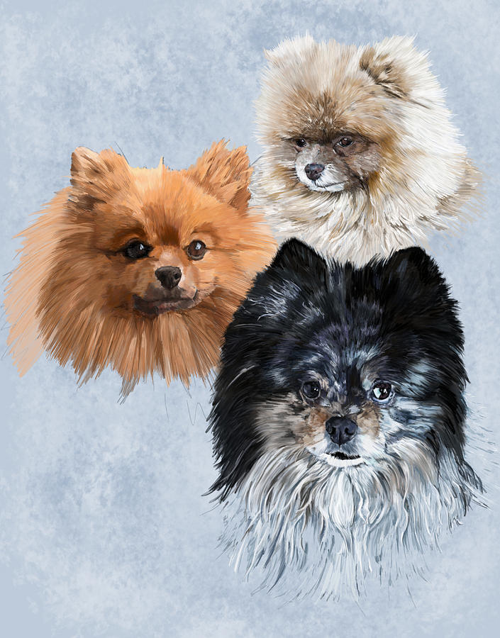 Pomeranians Painting - Murry 3 by Myke  Irving