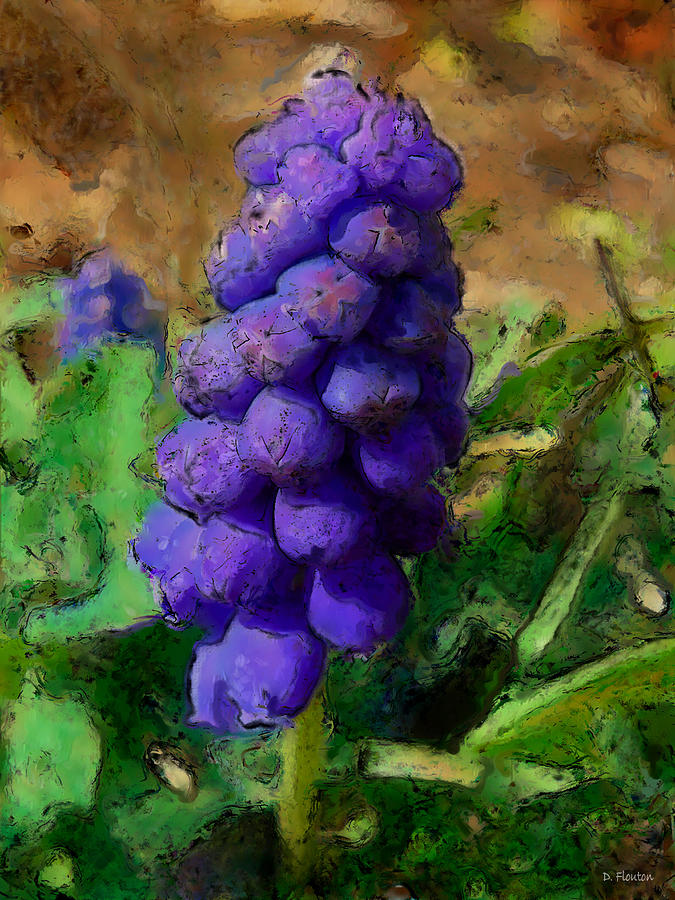 Grape Photograph - Muscari  by Dee Flouton
