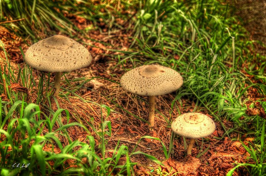 Hdr Photograph - Mushroom Family by E R Smith