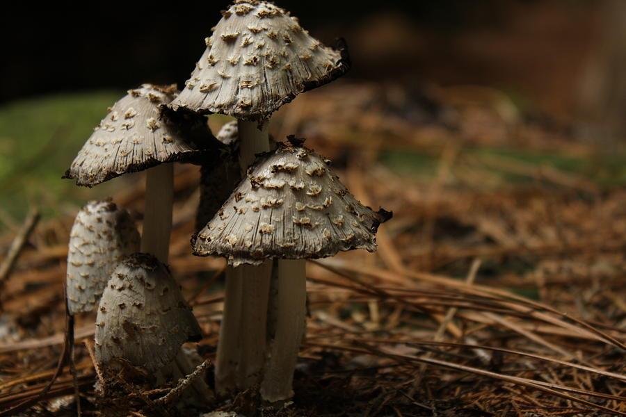 Mushroom Photograph - Mushroom Family by M W Kearney