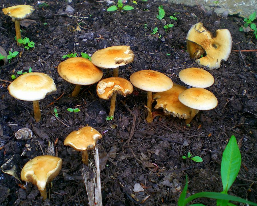 Mushrooms Photograph - Mushroom Mania by Cynthia Daniel