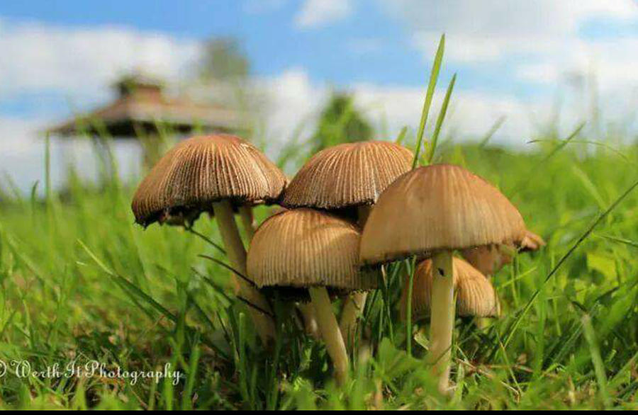 Mushroom Photograph - Mushroom by Sheila Werth