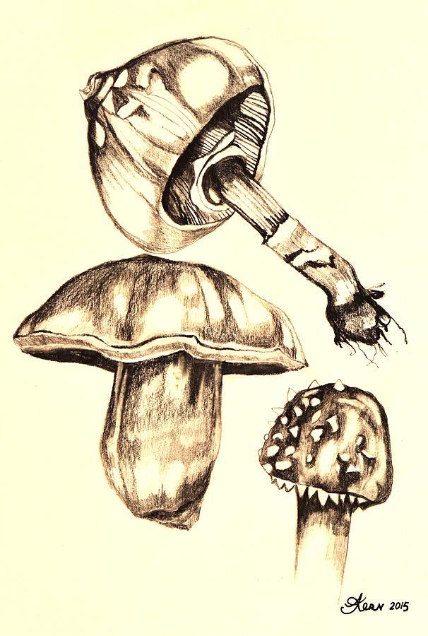 Drawing Drawing - Mushroom Study 4 by Jacqueline Kern