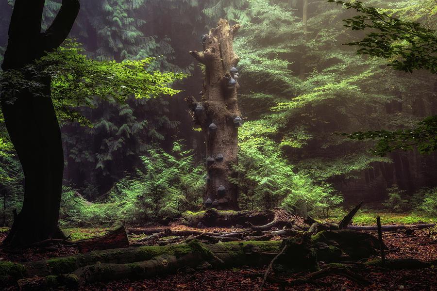 Mushroom Tree Photograph