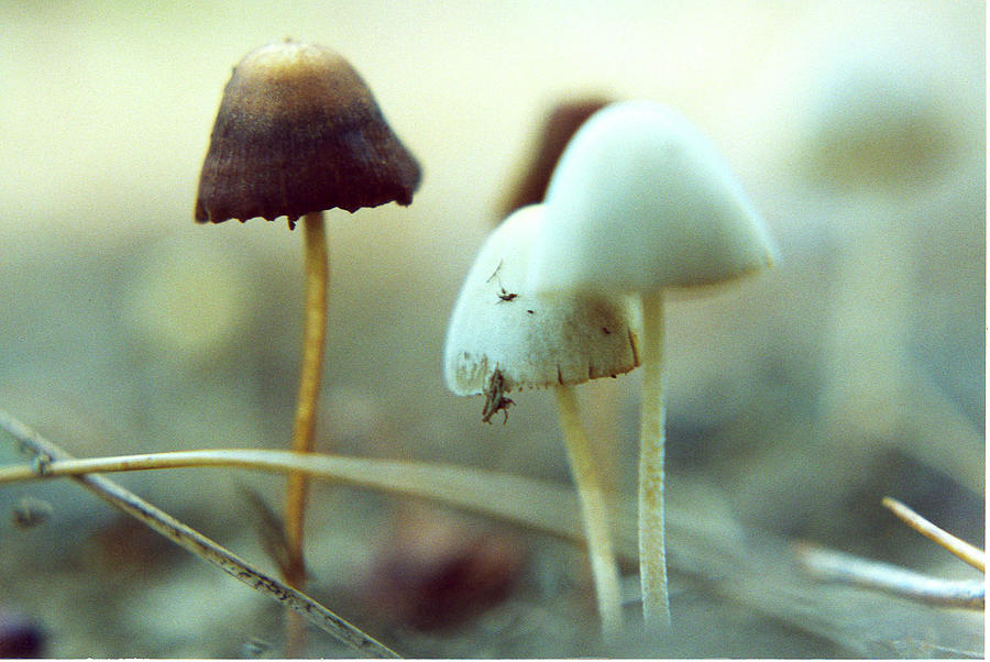 Mushrooms Photograph - Mushrooms by Don Youngclaus