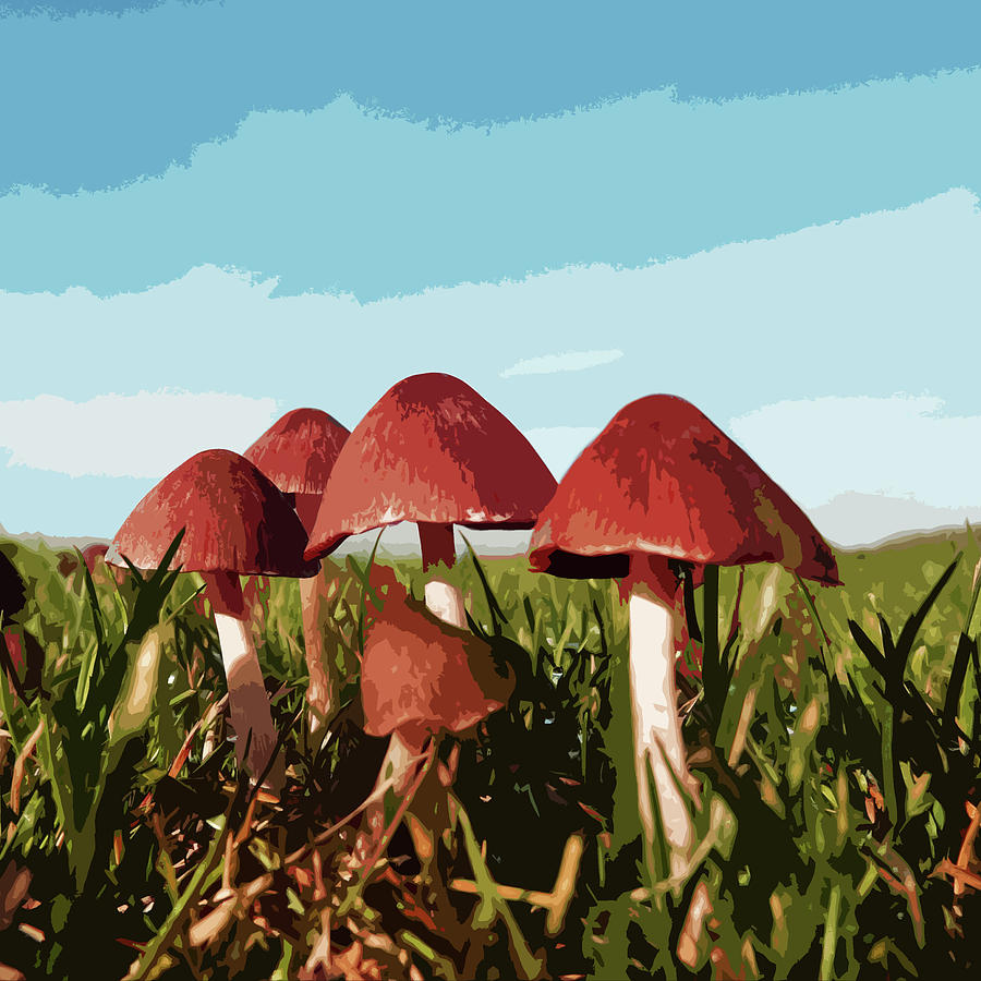 Mushrooms in Autumn by James Hill