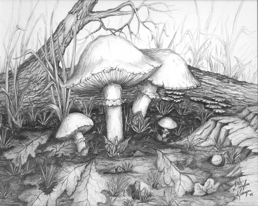 Mushrooms -pencil Study Drawing