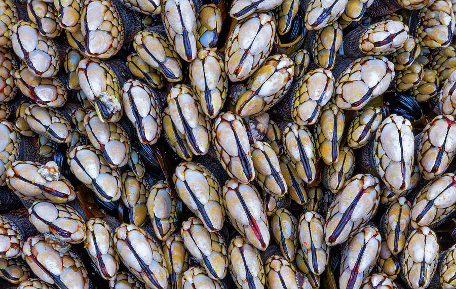 Mussel Grouping Photograph