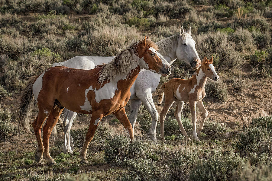 Mustang Family by Dawn Key